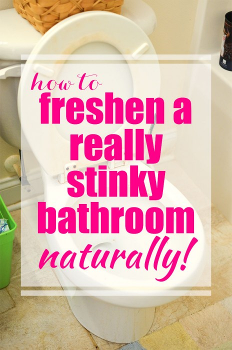 How to keep from drowning in pet hair How to thoroughly clean your bathroom
