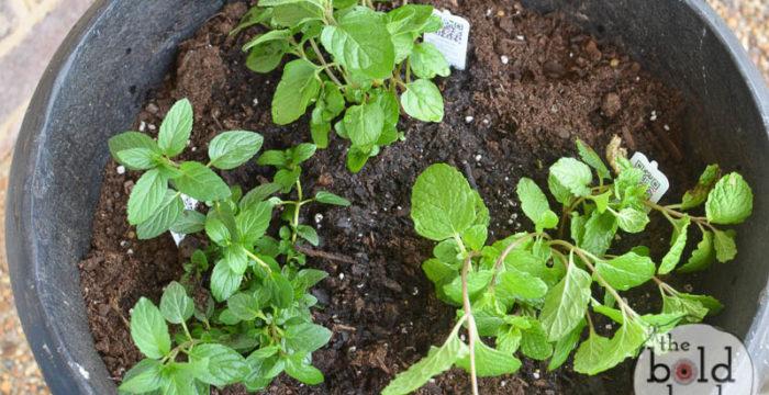 3 mint planter-4