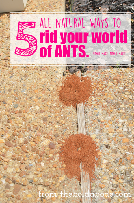 5-all-natural-ways-to-kill-ants