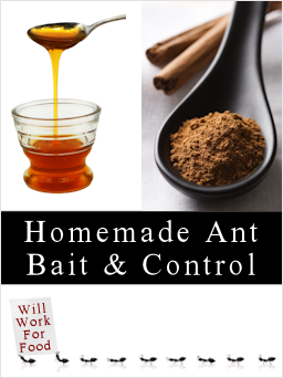 ant bait and control