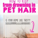 how-to-keep-from-drowning-in-pet-hari