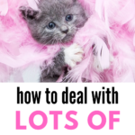 Gray kitten with the blue eyes and a pink feather boa