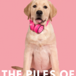 Yellow lab with pink headphones