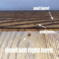 How to Get Rid of Ants – the most surprising way ever!