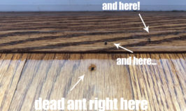 How to Get Rid of Ants - you probably have this in your home first aid kit right now!