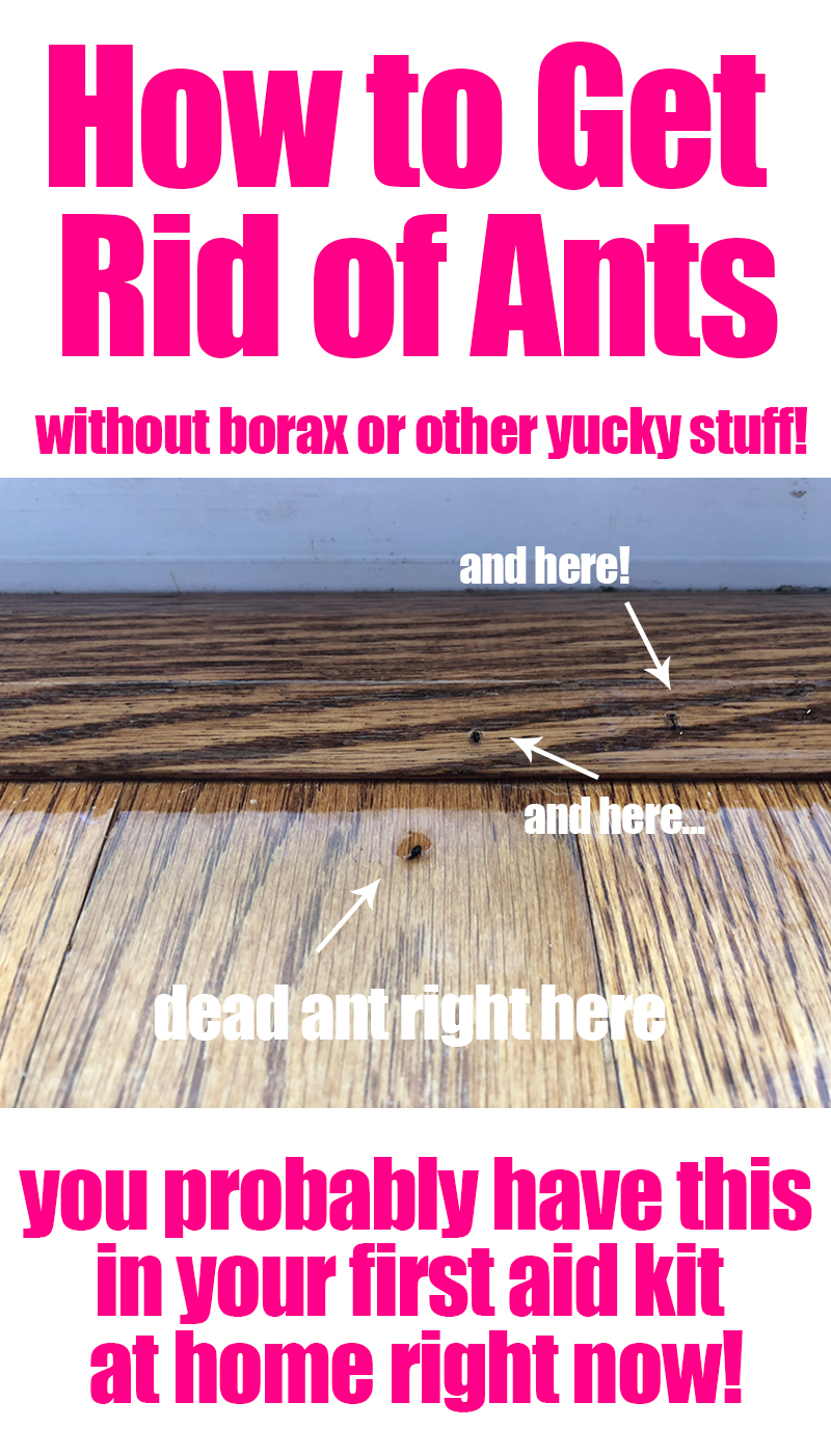 How to Get Rid of Ants without any borax or other yucky stuff! You probably have this ingredient in your at home first aid kit right now!