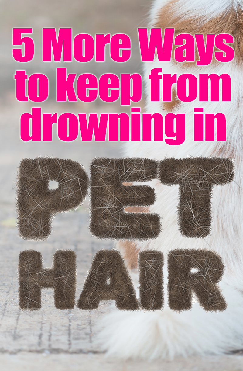 How to Clean Pet Hair: Are you drowning in Pet Hair? Here are 5 great way to help keep the pet hair under control. Great advice from readers of The Bold Abode! #pets #dogs #cats #cleaning #cleaningtips