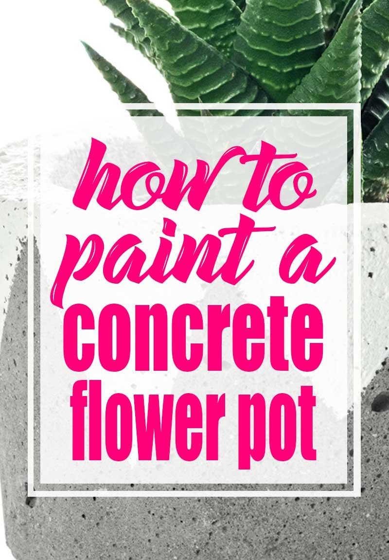 succulent in concrete planter